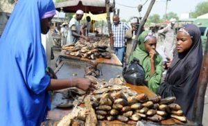 Smugglers flood Nigeria with harmful frozen fish –FG
