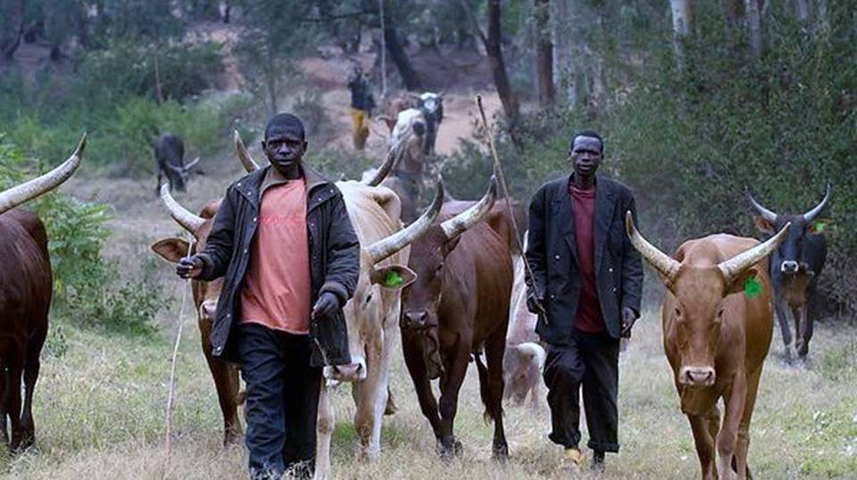Herdsman Beheads Girl In Ekiti Over Betrothal Agreement